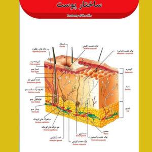 پوستر مدل پوست