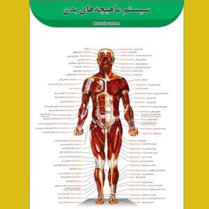 پوستر عضلات