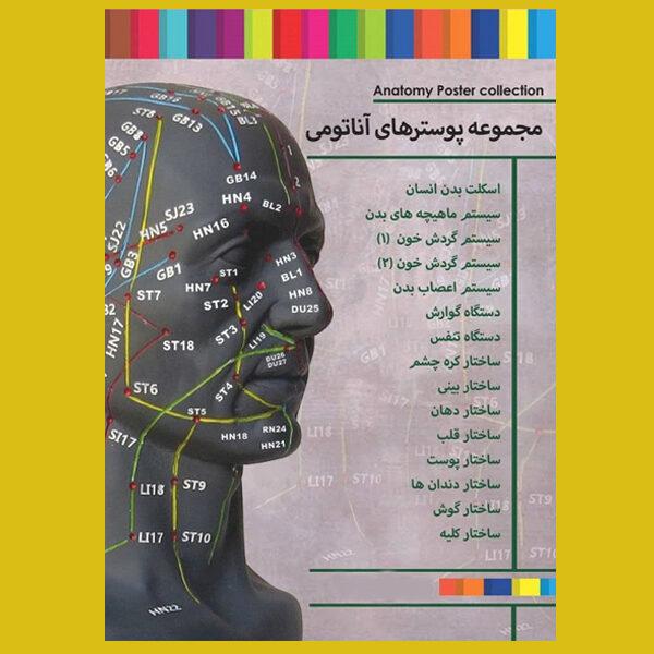 پوستر آناتومی